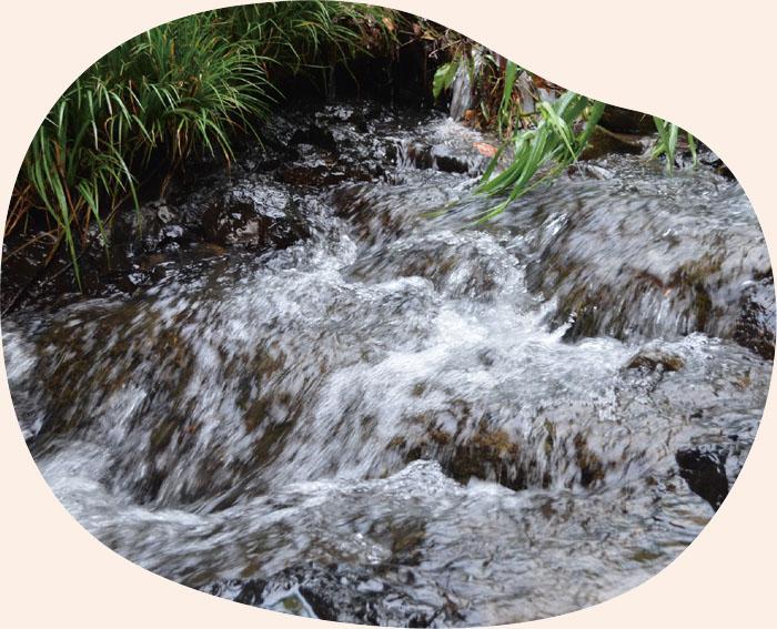 天然の湧水