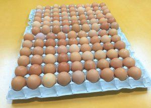 小さめサイズ98個+破卵保障10個